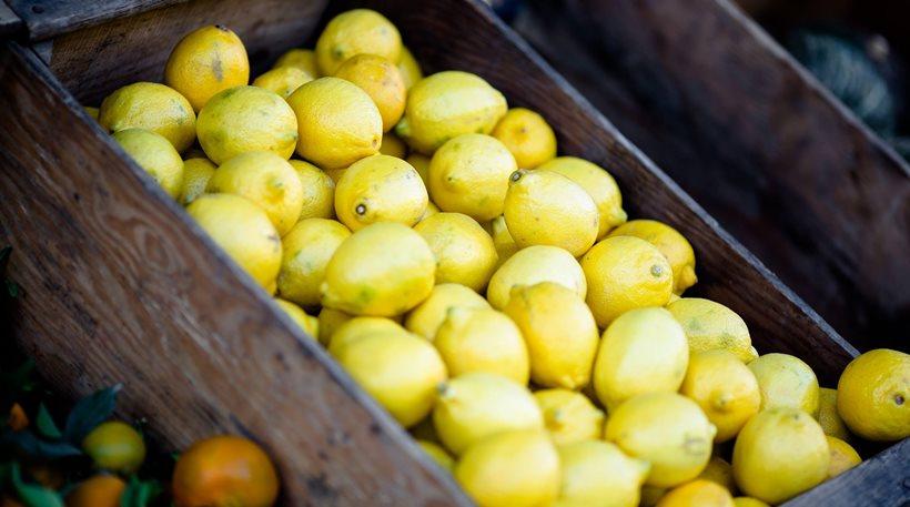 Λονδίνο: Πρόστιμο σε 5χρονο κοριτσάκι επειδή πουλούσε λεμονάδα έξω από φεστιβάλ