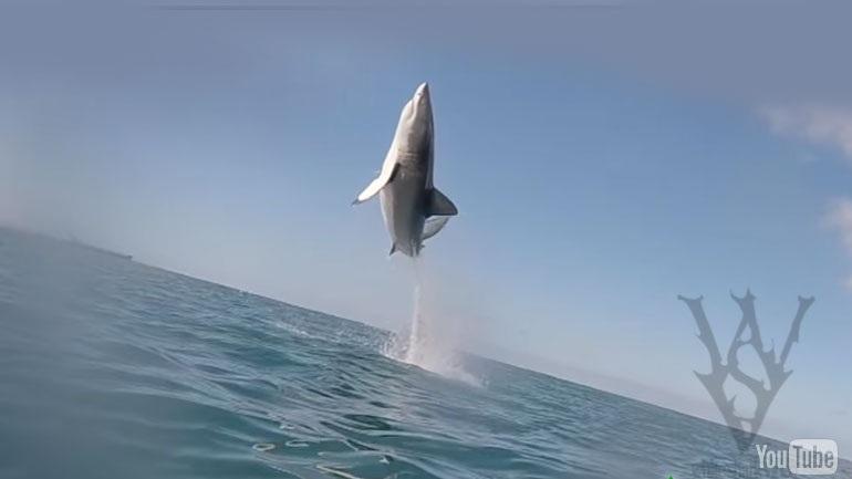 Απίστευτο: Λευκός καρχαρίας πηδά 2,5 μέτρα έξω από το νερό