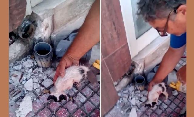 Τρίωρη επιχείρηση για να σώσουν γατάκι