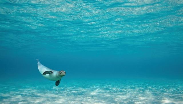 Ενδιαφέρον για το Θαλάσσιο πάρκο Αλοννήσου