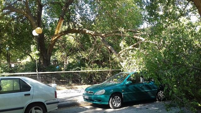 Δέντρο σε πάρκο της Λάρισας καταπλάκωσε τρία σταθμευμένα ΙΧ