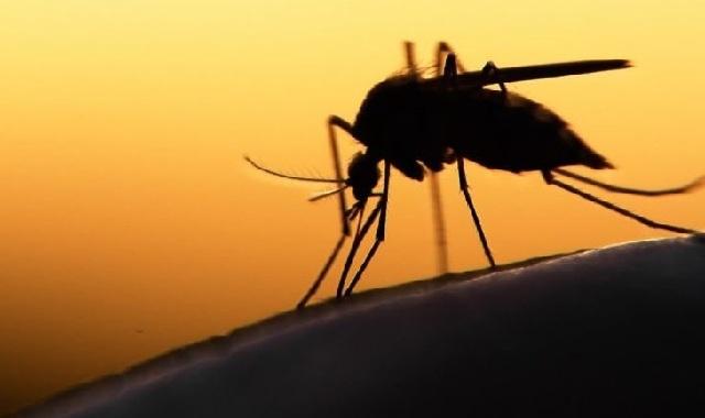 Τι είναι ο ιός του Δυτικού Νείλου και πώς προλαμβάνεται