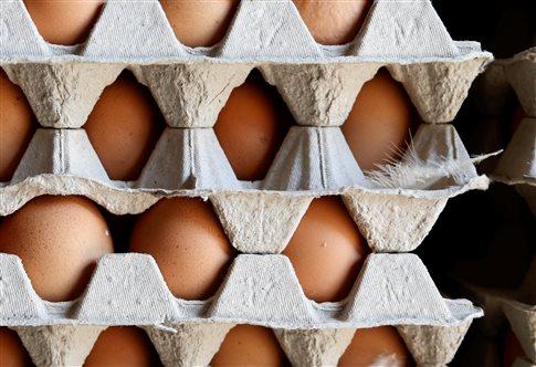 «Συναγερμός» για μολυσμένα αυγά στην Ευρώπη