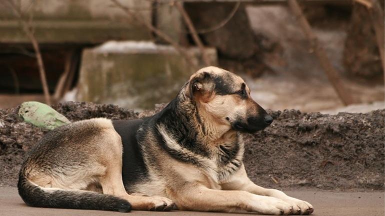 Τρίκαλα: Αλλεπάλληλα κρούσματα δηλητηρίασης αδέσποτων ζώων