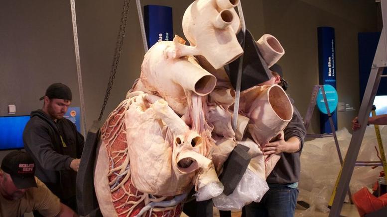 Η μεγαλύτερη καρδιά στον κόσμο εκτίθεται σε μουσείο του Τορόντο