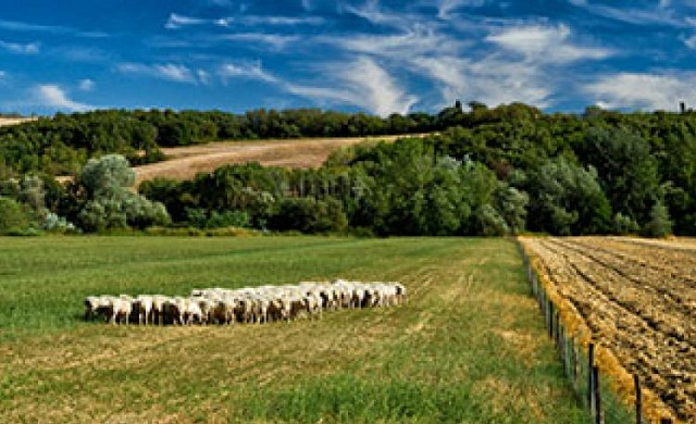 Πληρωμή δικαιούχων βιολογικής κτηνοτροφίας