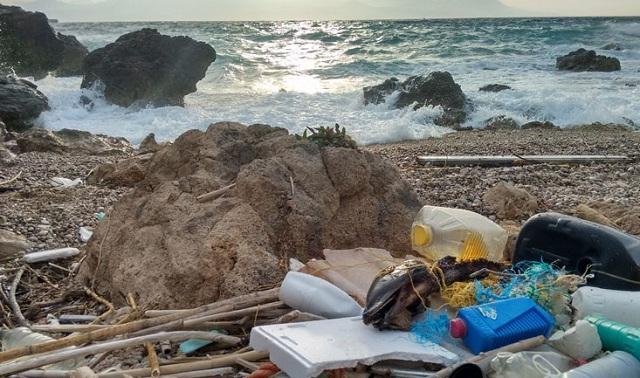 Nεκρά δελφίνια στις ελληνικές παραλίες, γεμάτα πλαστικό στο στομάχι τους