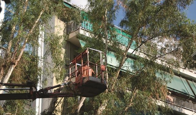 Την κοπή τριών δέντρων αποφάσισε η Επιτροπή Ποιότητας Ζωής