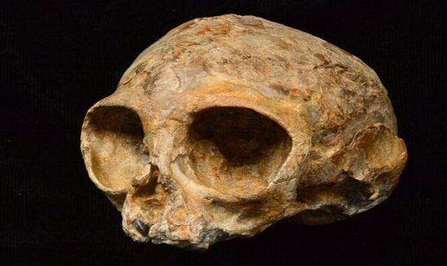 Ανακαλύφθηκε κρανίο 13 εκατ. ετών που ανήκε σε κοινό πρόγονο πιθήκων και ανθρώπων