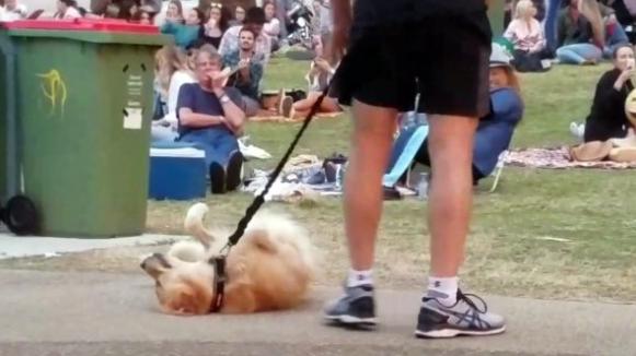 Ο σκύλος πείσμωσε. Μέχρι & νεκρός το έπαιξε για να μην φύγει από το πάρκο (video)