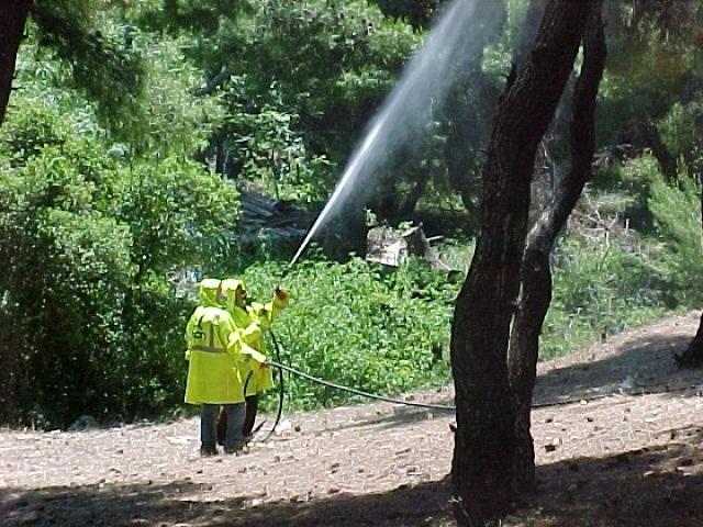 Αποτέλεσμα εικόνας για Το πρόγραμμα διενέργειας δακοκτονίας σε περιοχές της Σκοπέλου