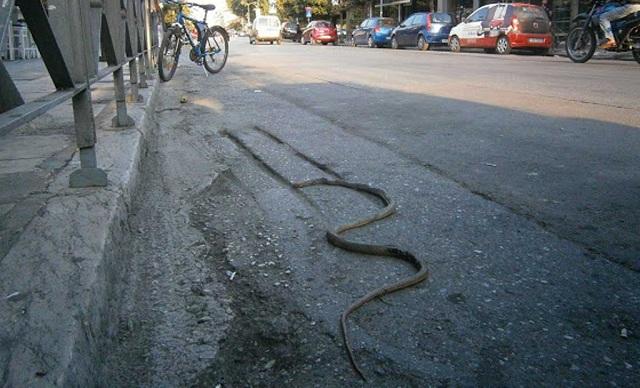Φίδι εμφανίστηκε και πάλι στο κέντρο της Λάρισας