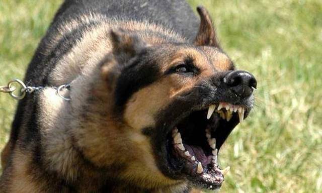 Στο νοσοκομείο Λαρισαίος μετά από επίθεση αγέλης σκύλων