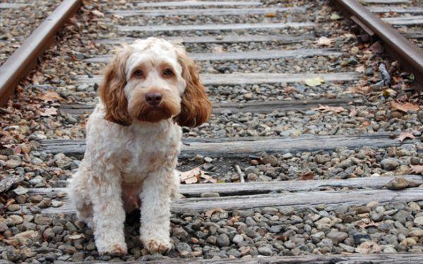 Εκκληση για στείρωση και καταγραφή ζώων