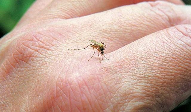 Κρούσμα του ιού του Δυτικού Νείλου και στην Αρκαδία