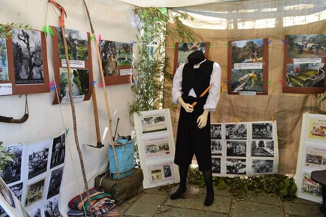 Εικόνες από την αγροτική ζωή στη Γιορτή ελιάς στη Δράκεια