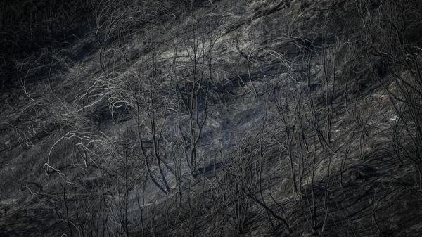 Σε ύφεση οι πυρκαγιές σε Διάσελο Ηλείας και Λιθακιά Ζακύνθου