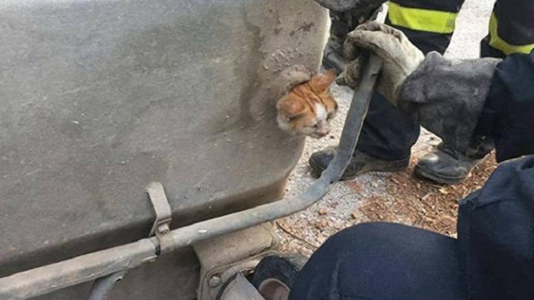 Επεισοδιακός απεγκλωβισμός γάτας από κάδο σκουπιδιών [εικόνες]