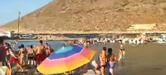 Πανικός σε παραλία στα Χανιά όταν εμφανίστηκε φίδι μισού μέτρου [βίντεο]