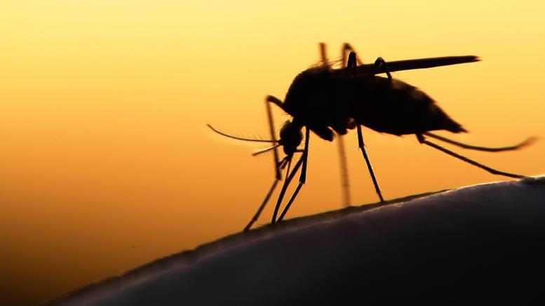 Τρεις θάνατοι από τον ιό του Δυτικού Νείλου: Τι συμβουλεύει το ΚΕΕΛΠΝΟ