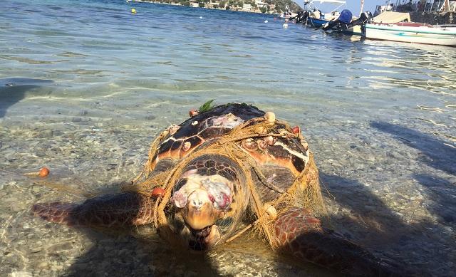Εντοπίστηκε νεκρή χελώνα καρέτα- καρέτα στην Χρυσή Ακτή Παναγιάς
