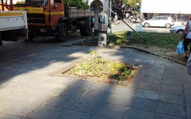 Ξεριζώθηκε δέντρο στην κεντρική πλατεία Τρικάλων. Λαμβάνει μέτρα ο δήμος