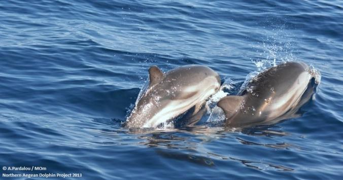 Καταγράφουν δελφίνια