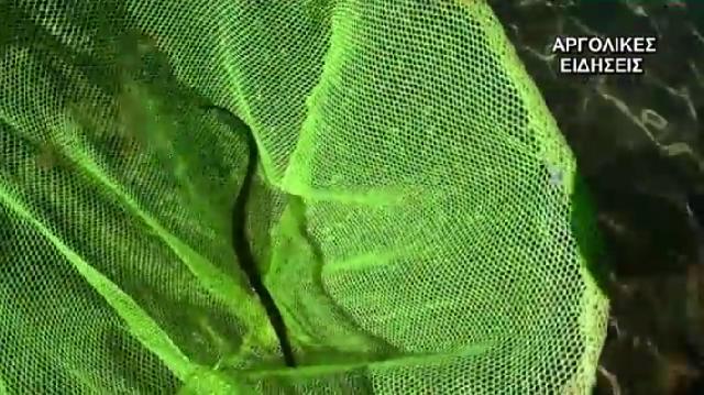 Είδος τροπικού ψαριού εντοπίστηκε στον Αργολικό κόλπο [βίντεο]