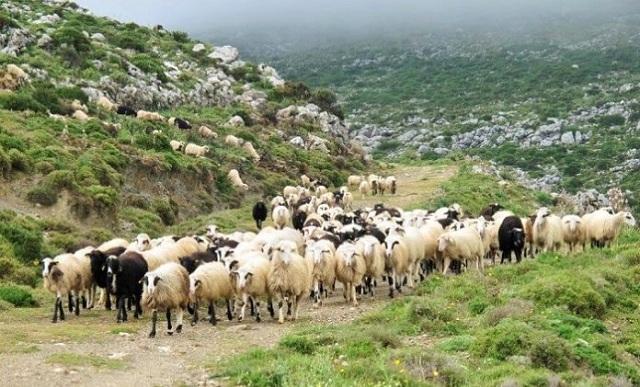 Με εξώδικο διεκδικούν αποζημιώσεις οι κτηνοτρόφοι της Λάρισας για τον κταρροϊκό