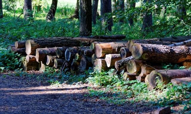 Ζουν από την ξυλεία