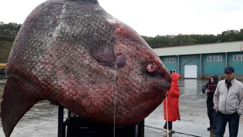 Ρωσία: Έπιασαν ψάρι- γίγαντα βάρους... ενός τόνου!