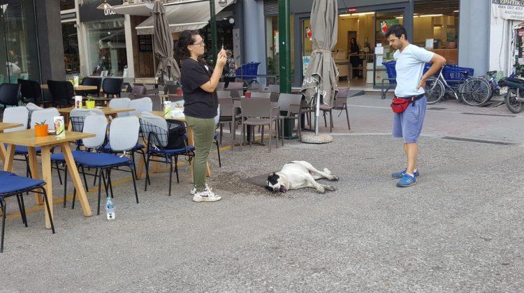 Δηλητηρίασαν σκύλους στο κέντρο των Τρικάλων