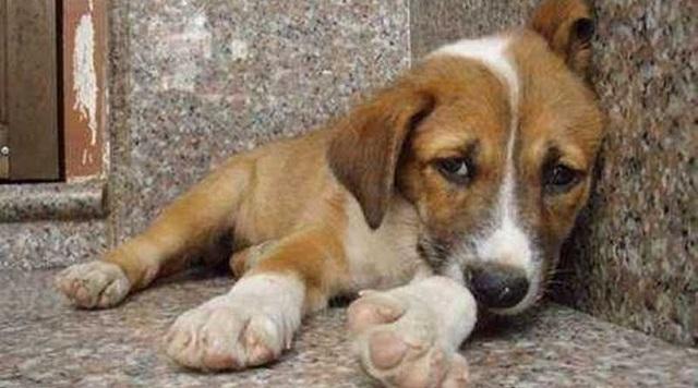 Ένας χρόνος φυλακή για κακοποίηση σκύλου: Κρατούσε το ζώο έγκλειστο σε άθλιες συνθήκες