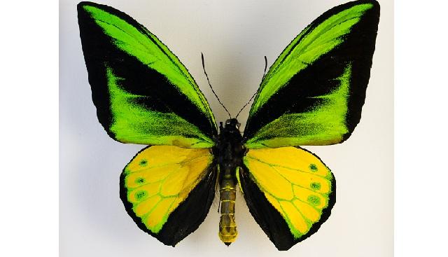 Αφιέρωμα στις πεταλούδες στο Μουσείο Πλινθοκεραμοποιίας στο Τσαλαπάτα
