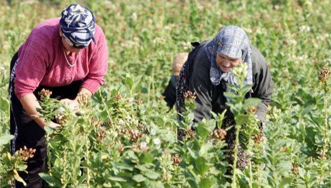 ΟΓΑ: Χρηματικό βοήθημα σε 1.300 πολύτεκνες αγρότισσες