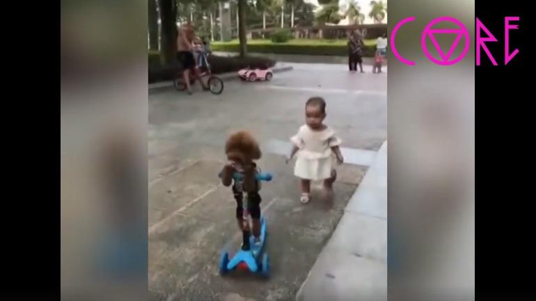 Κανίς κλέβει το πατίνι ενός μικρού παιδιού (Video)