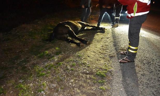 Λεωφορείο του ΚΤΕΛ Λάρισας συγκρούστηκε με άλογο