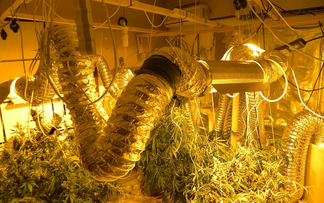 Πλήρως εξοπλισμένο εργαστήριο υδροπονικής καλλιέργειας κάνναβης σε διαμέρισμα στη Λάρισα