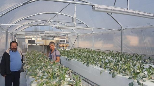 Λαχανικά που μειώνουν το σάκχαρο από το ΤΕΙ Θεσσαλίας