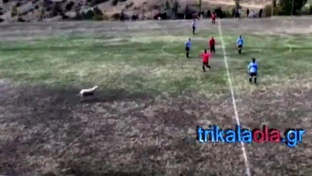 Παίχτες κυνηγούσαν προβατίνα την ώρα του αγώνα σε γήπεδο των Τρικάλων [video]
