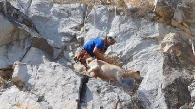 Επιχείρηση διάσωσης ζώων από απόκρημνη χαράδρα, στο Πετροχώρι Τρικάλων