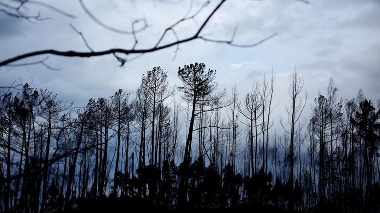 45 νεκροί από τις πυρκαγιές σε Πορτογαλία και Ισπανία