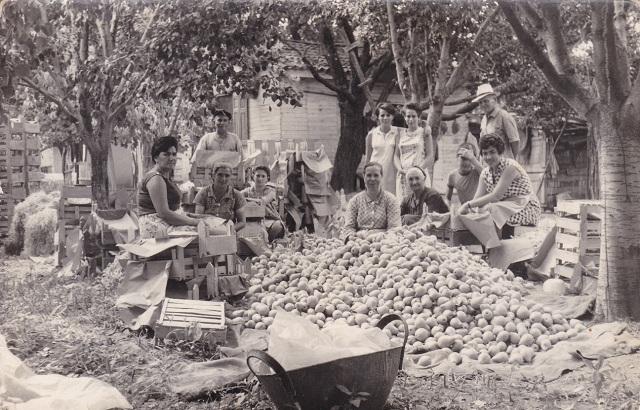 Ο Αγροτικός Συνεταιρισμός Ζαγοράς Πηλίου τιμά την προσφορά των γυναικών –αγροτισσών