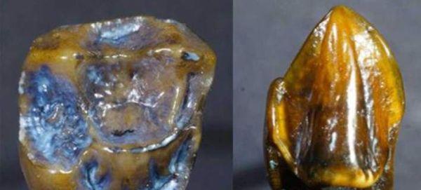 Απολιθωμένα δόντια ηλικίας 9,7 εκ. ετών ανοίγουν το δρόμο για αναθεώρηση της ιστορίας του ανθρώπινου είδους