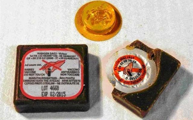 Ρίψεις εμβολίων –δολωμάτων από αέρος για τις κόκκινες αλεπούδες