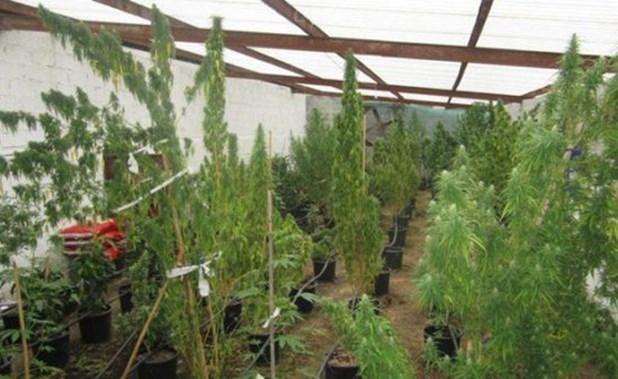 Kάθειρξη 20 ετών σε αλλοδαπό για υδροπονική καλλιέργεια χασίς στη Φαλάνη