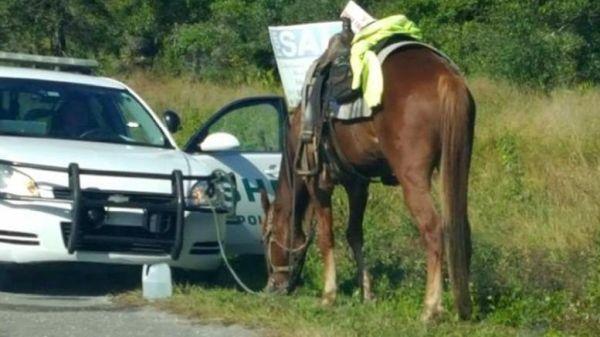 Συνελήφθη 53χρονη γιατί οδηγούσε μεθυσμένη ένα... άλογο