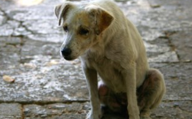 Καταγγελίες κακοποίησης ζώων στη Σκόπελο