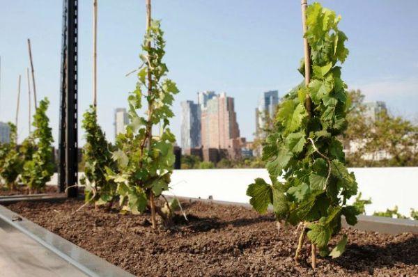 Μπόνους και εξοικονόμηση ενέργειας μέχρι 50% σε όσους φυτέψουν την ταράτσα