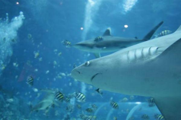 Ψαράς αλίευσε καρχαρία από την εποχή των δεινοσαύρων